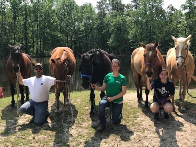 horses volunteers